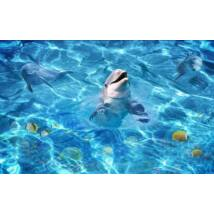 Vigyori delfin