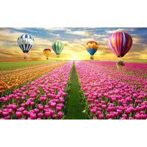 Hőlégballonok a tulipánmező fölött