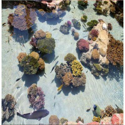 Sekély tenger korallokkal