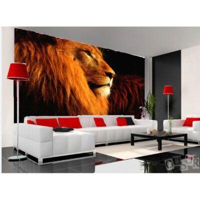 vörös oroszlán fej