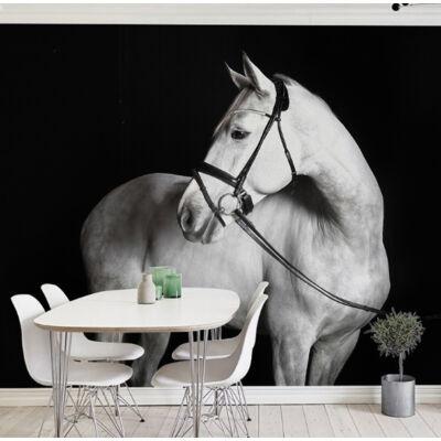 Fehér lovacska